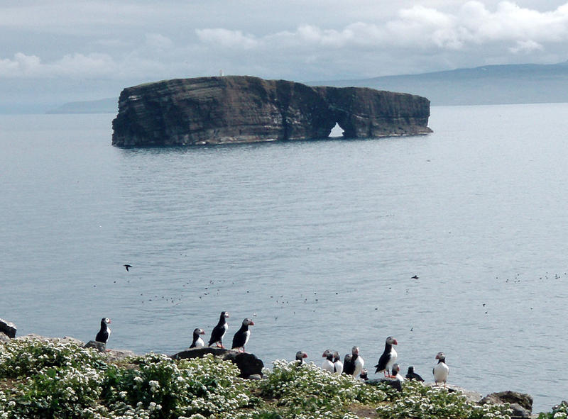 Puffin colony on Lagey overlooking Háey Island