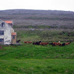 …But the house was occupied only by wild horses…