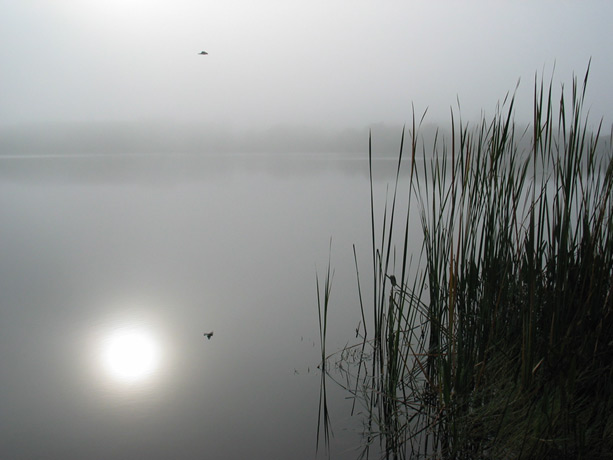 Fog on Lake Destiny