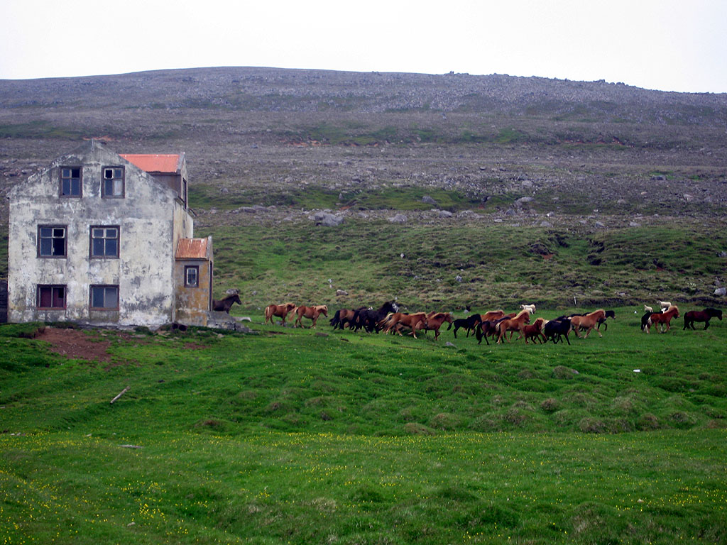 Horses run wild amid the ruins of old farmhouses.