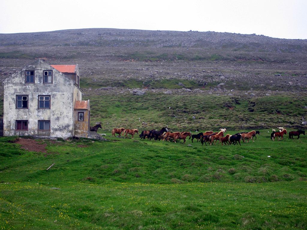 Horses run wild amid the ruins of old farmhouses.